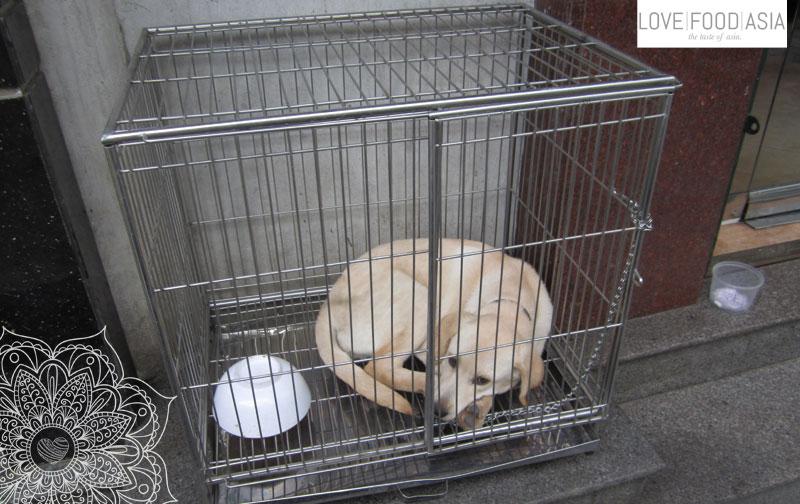 Hund im Käfig in Hanoi